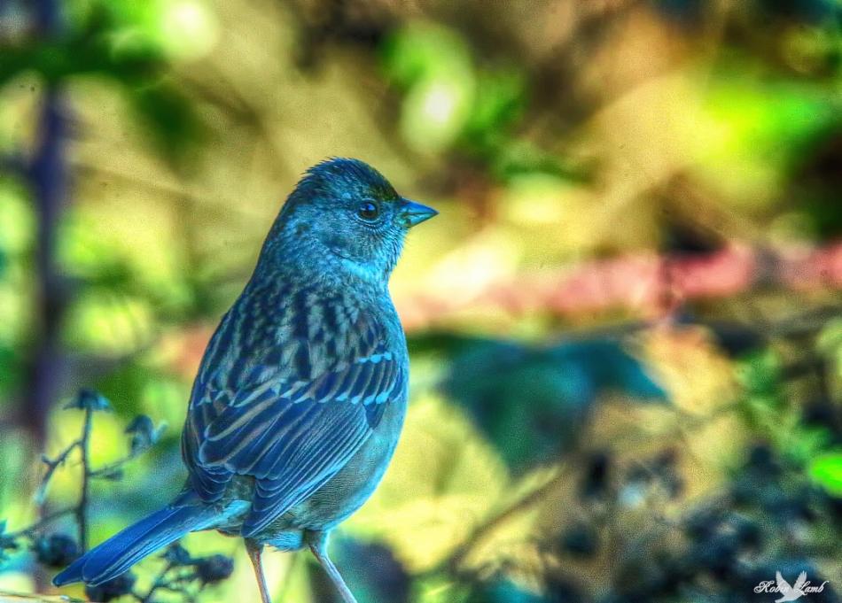GCsparrow