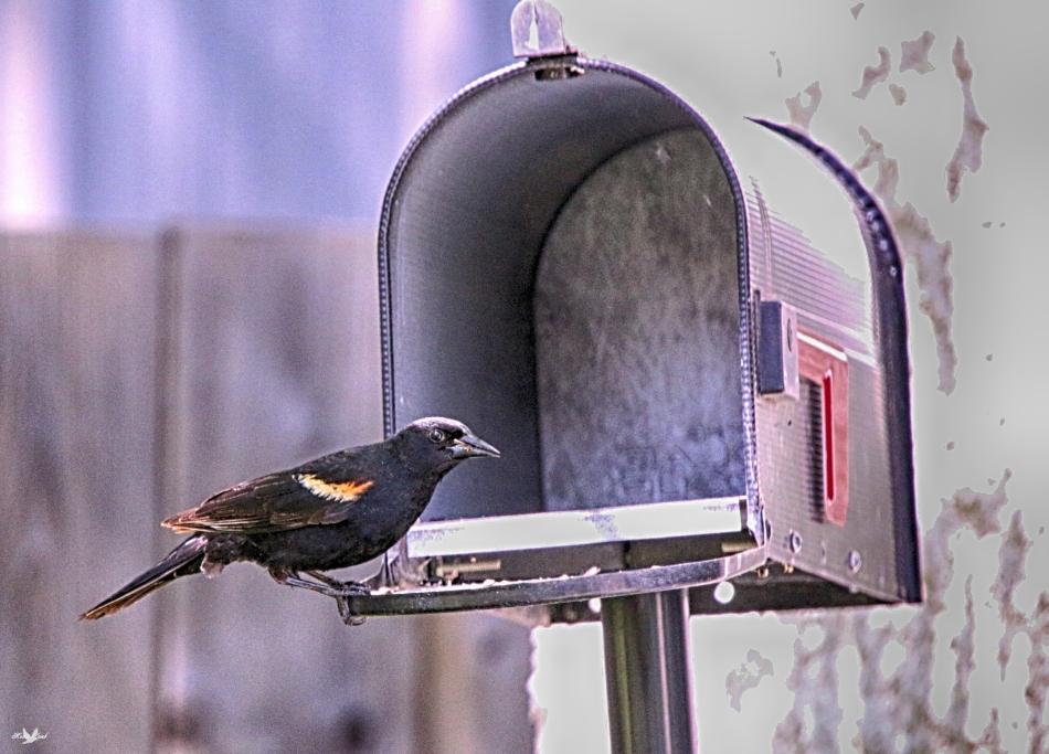 checkingmail