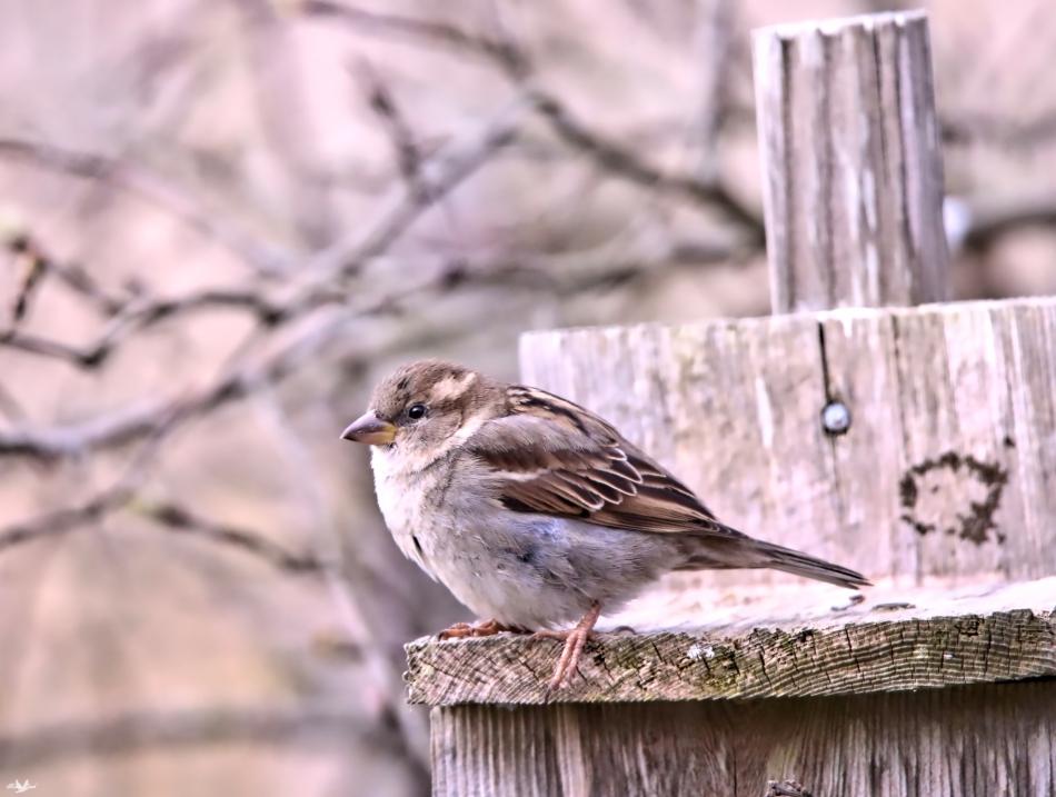 sparrowathome
