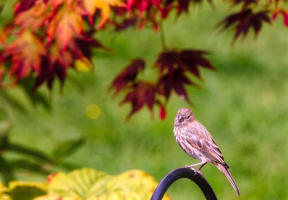 Finch&Leaves.jpg